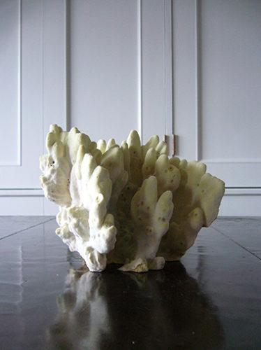 天然珊瑚オブジェ