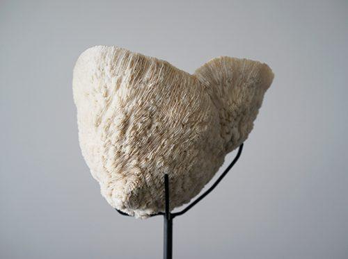 天然珊瑚のオブジェ スタンド付き